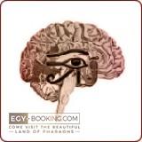 Brain and neurology