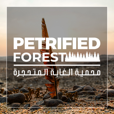 Fossilized forest reserve